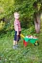 Boy with a cart of apples Stock Images
