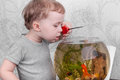 Boy catches fish in aquarium a goldfish an Royalty Free Stock Photo