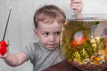 Boy catches fish in aquarium a goldfish an Royalty Free Stock Images