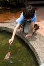 Boy catching little fish with a net Royalty Free Stock Photo
