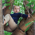 Boy climbed up a tree the little Royalty Free Stock Photos