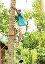 Boy climbing on palmtree