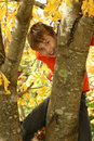 Boy climbing a tree Stock Photo