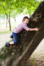 Boy climbing on tree and hugging it Royalty Free Stock Photos
