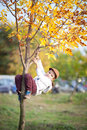 A boy climbing on a tree small in in action and hanging autumn season Royalty Free Stock Photos