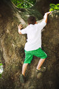 Boy climbing on tree trunk Stock Photo
