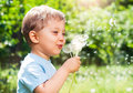 Boy With Dandelion Royalty Free Stock Photo