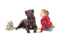 Boy dog and kitten together looking up on white background Stock Images