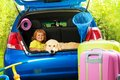 Boy and dog waiting for departure close shoot of a car with retriever years old in the trunk with bags trip trickle ball scoop net Stock Image