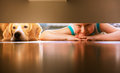 Boy with doggy friend looks under the bed little prank partners Stock Photos