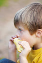 Boy eating corn on the cob side view shot of little Stock Photography