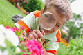 Boy, examining with a magnifying glass flower Stock Images