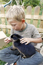 Boy feeding his pet rabbit blond youngster and best friend playing outdoors and cute black dwarf domestic with appel lad fondle Stock Image