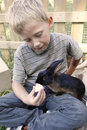 Boy feeding his pet rabbit blond youngster and best friend playing outdoors and cute black dwarf domestic with appel lad taking Royalty Free Stock Photos