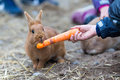 Boy feeding rabbit Royalty Free Stock Photo
