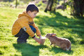 Boy feeding rabbit little in farm Royalty Free Stock Photography