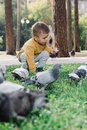 Boy feeds pigeons Royalty Free Stock Photo