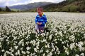 Boy on field of narcissus poeticus in spring Royalty Free Stock Photo