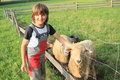 Boy fondling a sheep young kid smiling woking as herder Royalty Free Stock Images
