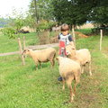 Boy fondling a sheep young kid woking as herder Stock Image
