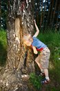 Boy in forest Royalty Free Stock Photography