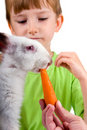 Boy gives the rabbit a carrot Stock Images