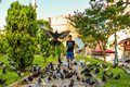 The boy and the pigeons. Royalty Free Stock Photo