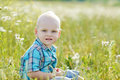Boy in green grass blonde sitting on the meadow Stock Photography