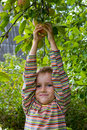 Boy harvests of apples Royalty Free Stock Images