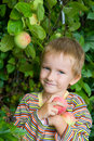 Boy harvests of apples Stock Photo