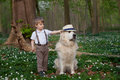 Boy and his dog two years old putting a hat on Royalty Free Stock Image