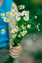 Boy hold Bouquet of camomiles in a hand. Royalty Free Stock Photo