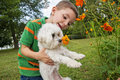 Boy holding dog smelling flower holds maltese up to smell a wildflower Stock Images