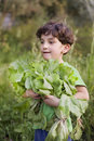 Boy holding organic lettuce Stock Photo
