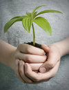 Boy holding seedling Stock Photos