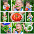 Boy holding a tomato collage of images kids and green peas in garden Royalty Free Stock Image