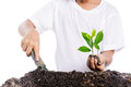 Boy holding young plant in hands above soil Royalty Free Stock Photo