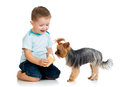 Boy kid feeding dog on white background Royalty Free Stock Photography
