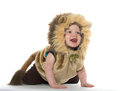 Boy in lion costume month old baby a for halloween on white background Royalty Free Stock Images