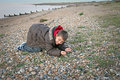 Boy looking for shells photo of a young seashells on the kent coast of whitstable Stock Images