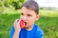 Boy nibbling red apple holding by one hand and it Royalty Free Stock Photos