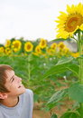 Boy Observing a Sunflower Royalty Free Stock Image