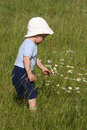 Boy picking a daisy Royalty Free Stock Photo