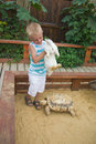 Boy playing with rabbit and turtle in sandbox Royalty Free Stock Images