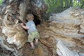 Boy plays in hollow tree Royalty Free Stock Photo