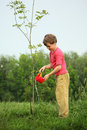 Boy pours on seedling of tree Royalty Free Stock Photo