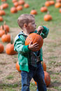 Boy pumpkin picking little pumpkins in a field in the fall Stock Photos