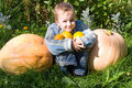Boy and pumpkins Royalty Free Stock Photography