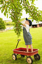 Boy reaches mulberries in wagon little picking and eating off tree while standing a Royalty Free Stock Photo