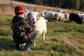 Boy and sheep Stock Photography